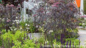 Greening-Grey-Britain_Garden_wynik