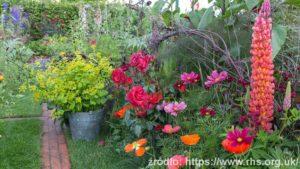 The-Anneka-Rice-Colour-Cutting-Garden_wynik